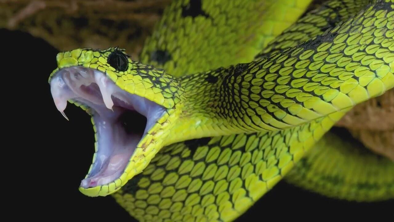 Dünyanın En Zehirli Hayvanı nedir