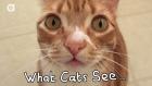 Kediler Çevrelerindeki Dünyayı Nasıl Görür?