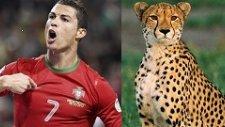 Futbolculara Hayvanlar Aleminden İlginç Benzetmeler