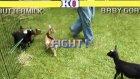 Street Fighter - Keçi ve Koyun Sürümü