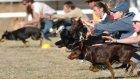 Yarış Kazanmak İçin Herşeyi Yapan Şirin Köpek