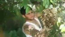 Arılara Fısıldayan Türk