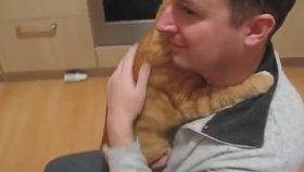 Sahibinin Kucağında Bebek Gibi Uyuyan Kedi