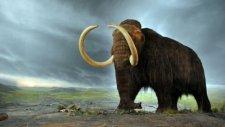 40 000 yıllık Mamut klonlanacak mı?