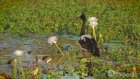 Kakadu National Park Vacation Travel Guide | Expedia