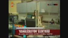 YTÜ'de Bakteriden Enerji Üretilmesi