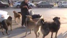 Sokak Köpekleri İle Dolaşan Kadın