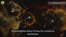 Idrees Abkar (İdris Abkar) Surah Isra 105-111  (Masaallah) Ashabı Kehf