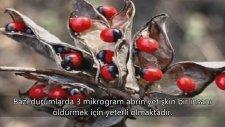 Dünyanın En Zehirli 10 Bitkisi
