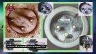 100 bin yıllık eletrikli cihaz parçası bulundu | SpaceExplorer.TV