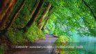 Doğa Dostu - Greenlife Webmaster-3web