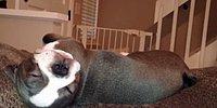 Uyurken Kanepeden Düşen Yavru Köpek