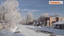 Ağaçlar Buz Tuttu