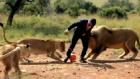 Aslanlarla Futbol Oynadı!