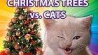 Meraklı Kediler, Yeni Yıl Ağaçlarına Karşı