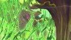 Winx Club - Sezon 5 Bölüm 12 - Cesaret Testi (Klip3)