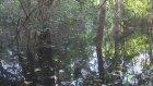 Güney Amerika: Amazon Nehri, Brezilya