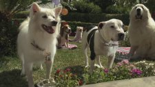 Beverly Hills Chihuahua 3: Viva La Fiesta (2012) Fragman