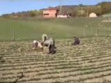 Safranbolu Aşağıgüney Köyü 1.bölüm(Safran Üretimi)