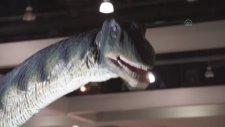 Abd'de Dinozorları Keşfet' Sergisi