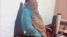 Dünyanın En Net Konuşan Muhabbet Kuşu
