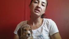 Evde Yavru Köpek Bakımı ve Gerekenler