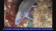 RTÜK Ceza Belgeseli - Suda Yüzen Balıklar