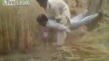Pakistan'da İnsan Gücüne Dayalı Buğday Hasadı