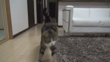 Kutucu Kedi Maru
