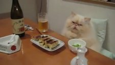 Yemek Yerken Birden Ciddileşen Ciddi Kedi