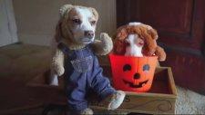 Dünyanın En Mutsuz İki Köpeği