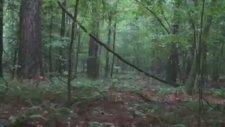 Ormana Gönderdiği Garip Seslere Cevap Alan Avcı