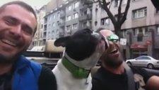Sevdiği Şarkı Çalınınca Efkarlanan Köpek