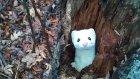 Ağaç Kovuğuna Saklanmış Kakım