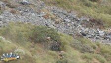 Keçilerin Sessizliği