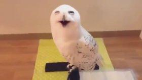 Hunharca Gülen Baykuş