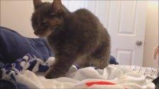 Büyük Sıkıntıları Olan Hiperaktif Kedi