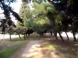Demirtepe Çamlık