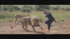 Aslanlarla Futbol Oynamak