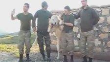Köpeğe Halay Çektiren Mehmetçik