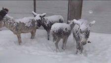 Siverek'te Eşeklerin Yine Buz Tutması