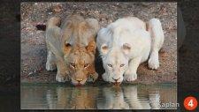 20 İnanılmaz Albino Hayvanlar