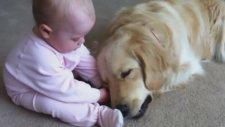 Köpeğin Ağzından Kemiği Almak İsteyen Bebek