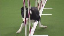 Bu köpeğin hızına hayran kalacaksınız