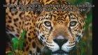 Çenesi En Güçlü 10 Hayvan