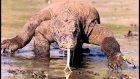 Dünyanın En Vahşi ve Tehlikeli 10 Hayvanı