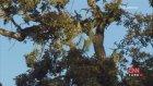 Ağaçkakan & Sincap