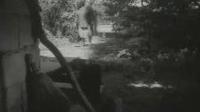 Nuri Bilge Ceylan'ın ilk Kısa Filmi - Koza (1995)