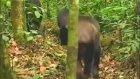 Katil Şempanzeler | Aslanlar ve Filler