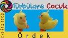 Oyun Hamuru ile Ördek Yapımı | Türbülans Çocuk | Play Doh Duck